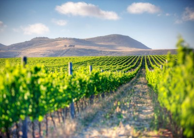 wine-land-south-africa